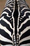 Zebra texture Royalty Free Stock Photography