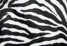 Zebra texture Stock Photography