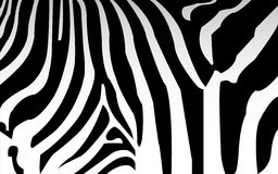 Zebra texture Black and White Stock Images