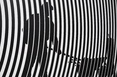 Zebra texture and pattern Stock Photography