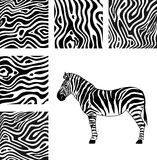 Zebra, texture of zebra Royalty Free Stock Image