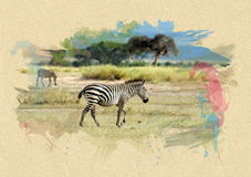 Zebra on textured paper. Brush effect Stock Images