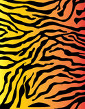 Zebra of tijgerachtergrond van het Strepen de kleurrijke patroon in Stock Afbeelding