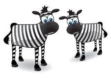 Zebra twee Royalty-vrije Stock Afbeeldingen