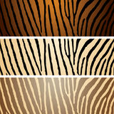 Zebra variation Stock Photography
