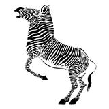 Zebra - vector Stock Photography