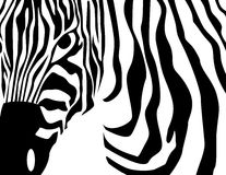 Zebra vector Royalty Free Stock Photos