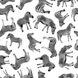 Zebra vector hand drawn graphic illustration seamless pattern on white background stock illustration