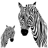 Zebra. Vector illustration. Stock Images