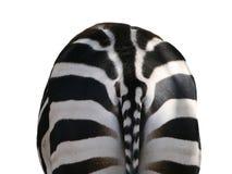Zebra, vista posteriore Fotografie Stock Libere da Diritti