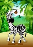 Zebra w dżungli Obraz Stock