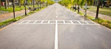 Zebra walk way with palms and ditch. Side way Royalty Free Stock Photography