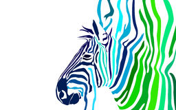 Zebra Wallpaper/Banner. Vectored illustration of a Zebra; you can change the background Stock Images