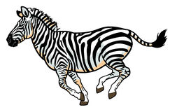 Zebra on white Stock Photo