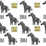 Zebra on a white background isolated. African animals  Stock Images
