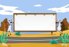 Zebra and white board Stock Image