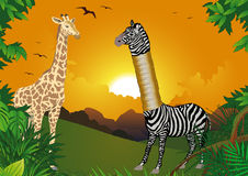 Zebra who wanted to be higher Royalty Free Stock Photo