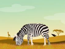Zebra in the wild. Illustration of zebra in the wild Royalty Free Stock Photo
