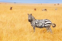 Free Zebra With QR Code On The Back Concept In Field Stock Image - 152134621