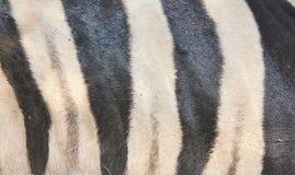 Zebra - wzór Czarny I Biały Obraz Stock