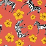 Zebra yellow hibiscus red background Stock Photography