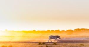 Zebra zmierzch Afryka Obraz Stock