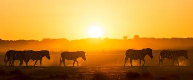 Zebra zmierzch Afryka Fotografia Royalty Free