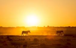 Zebra zmierzch Botswana Obrazy Royalty Free
