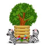 Zebra zwei vor einem leeren hölzernen Schild Stockbild