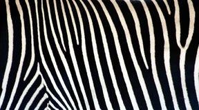 Zebrabeschaffenheit Lizenzfreie Stockbilder