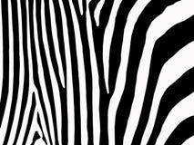 Zebradruck Stockfoto