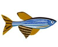 Zebrafish cartoon Danio rerio aquarium fish Stock Images