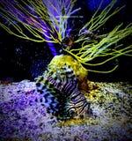 Zebrafish arkivbilder