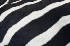 Zebrahaut. stockfoto