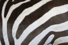 Zebrahaut lizenzfreie stockbilder