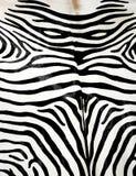 Zebrahaut Lizenzfreie Stockfotos