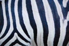 Zebrahaut Stockfoto