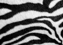 Zebrahaut-Mustergewebe Stockbilder