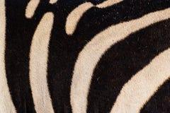 Zebrahauthintergrund Lizenzfreie Stockbilder