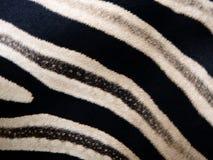 Zebrahauthintergrund Lizenzfreies Stockfoto