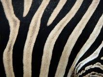 Zebrahauthintergrund Stockfotografie