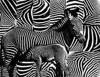 Zebrahautmuster. Stockbilder