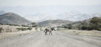 Zebramarkering en v?g, Kaokoland Kunene region Namibia royaltyfria bilder