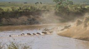 Zebramarkering Mara River i Kenya arkivbilder