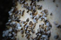 Zebramuscheln auf einem Pier Lizenzfreie Stockfotos