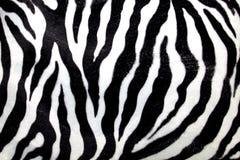 Zebramuster Lizenzfreie Stockfotos