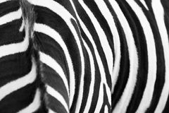 Zebramuster Lizenzfreie Stockfotografie