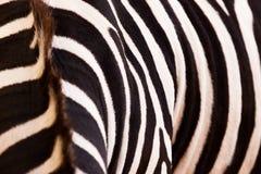 Zebramuster Stockfotos