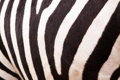 Zebramuster Lizenzfreies Stockfoto