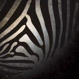 Zebramuster, afrikanischer Hintergrund. Vektor Abbildung